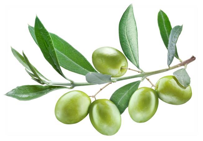 oliveleaves
