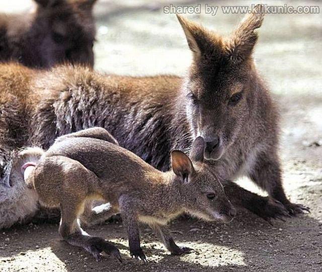 http://3.bp.blogspot.com/-f266ko1dAoI/TXzFPtLGXaI/AAAAAAAARFY/OmIg-wJBRg8/s1600/these_funny_animals_635_640_29.jpg