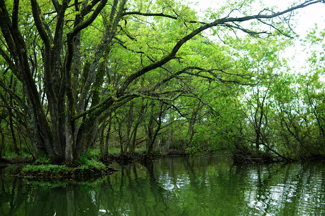 A green pond