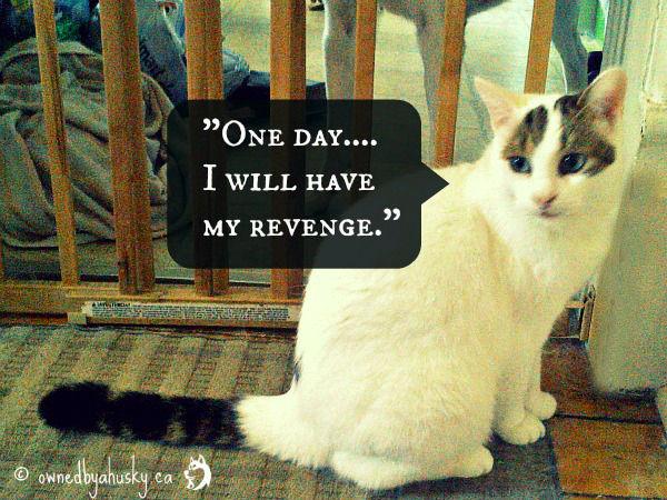 cat revenge