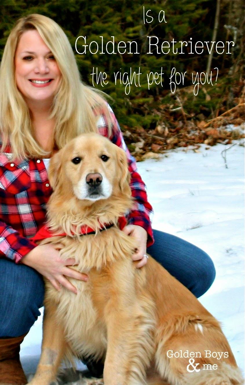 Information about Golden Retriever puppies-www.goldenboysandme.com