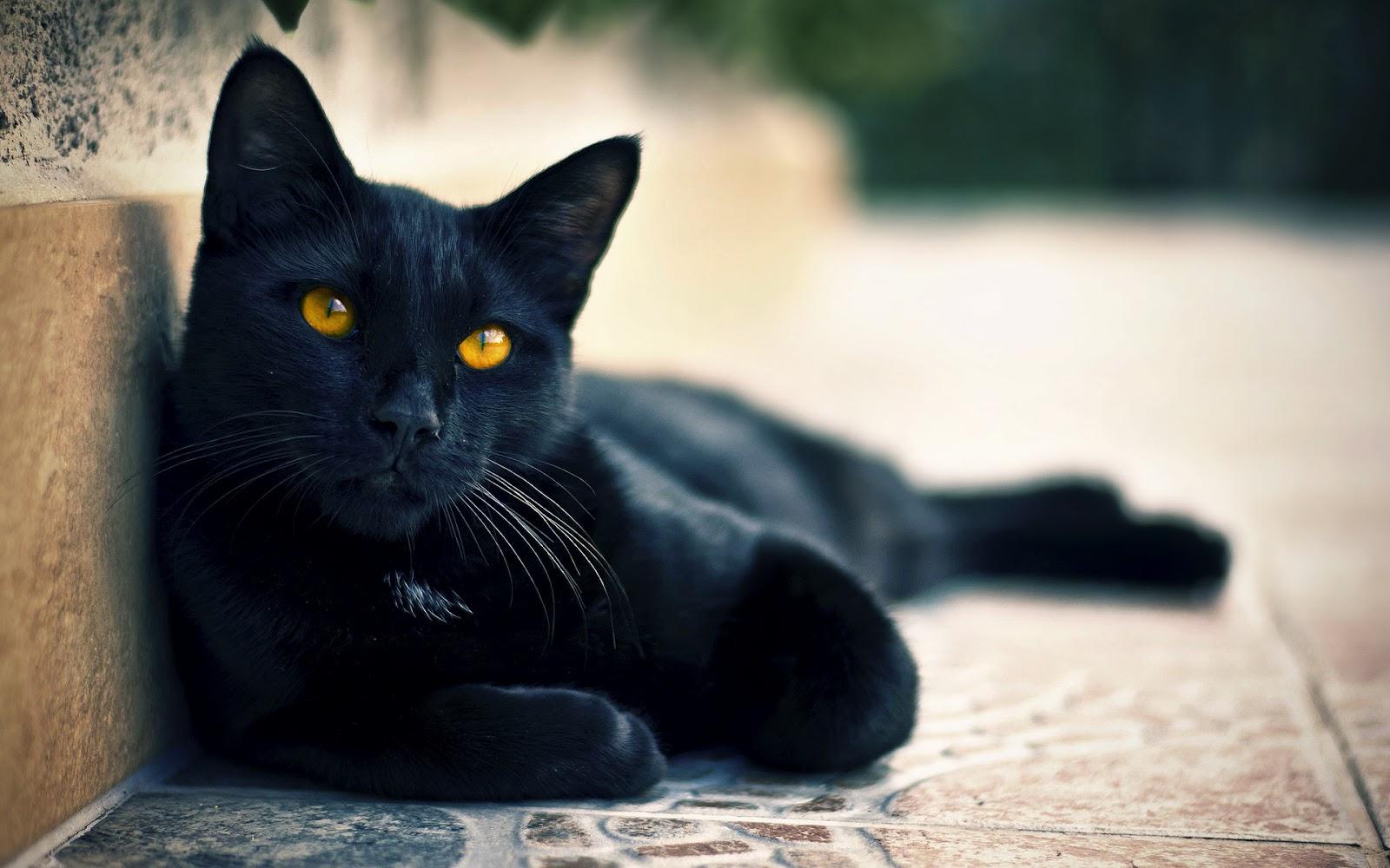 Смотреть онлайн бесплатно поиметь чёрную масажистку 25 фотография