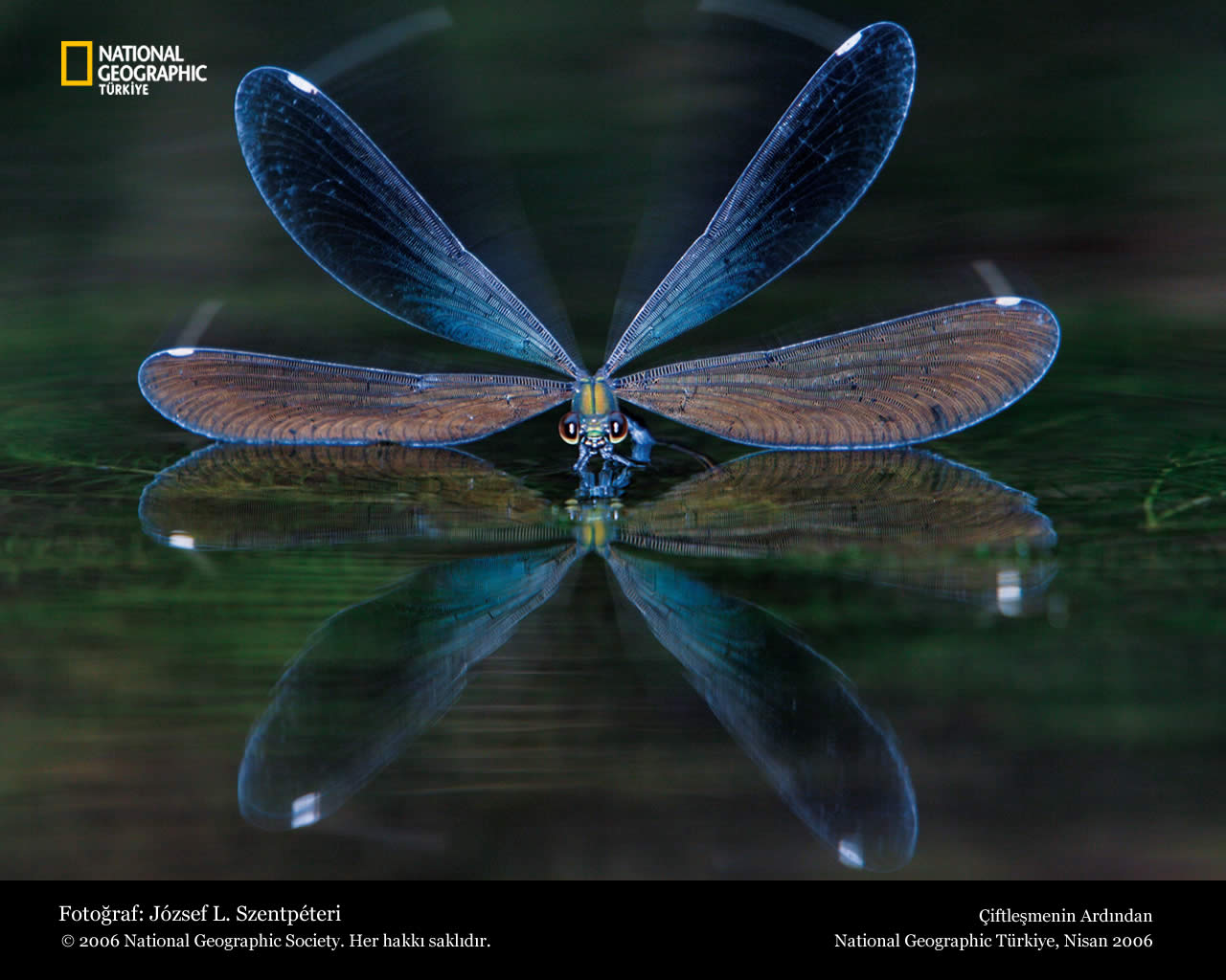 Funny Dragonfly Wallpaper For Desktop Animal