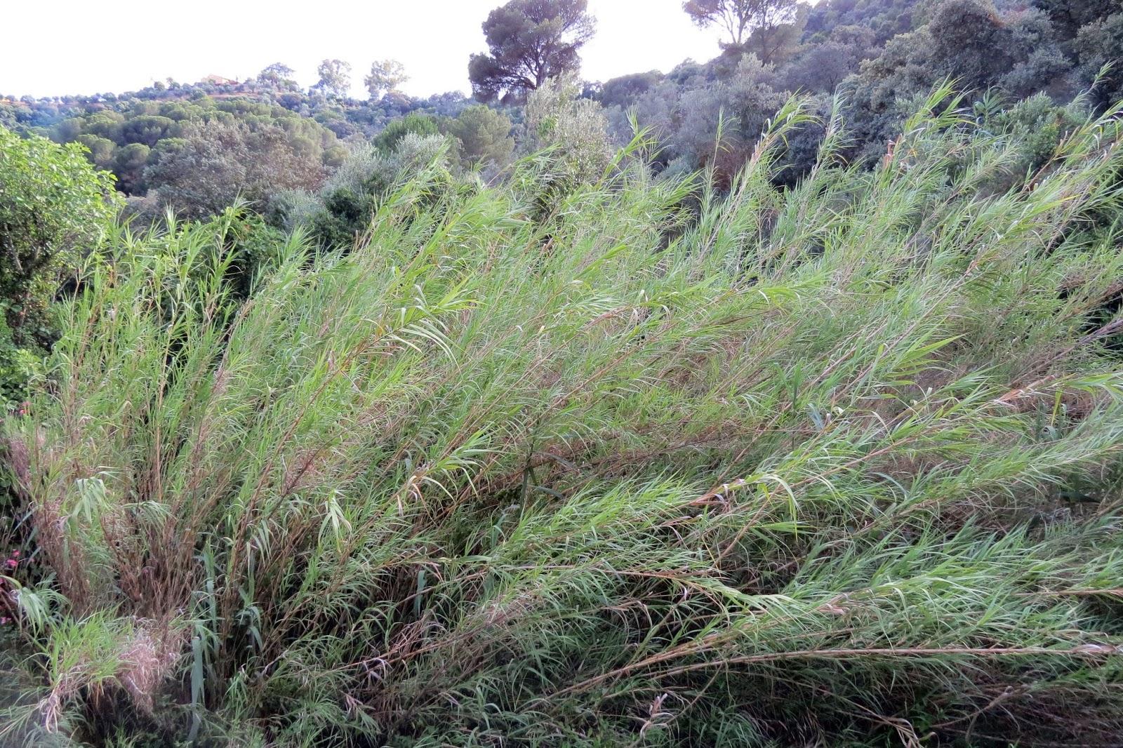 Notas cordobesas por el camino n mero 51 de las ordenanzas tramo del arroyo de linares - El olivar de albarizas ...