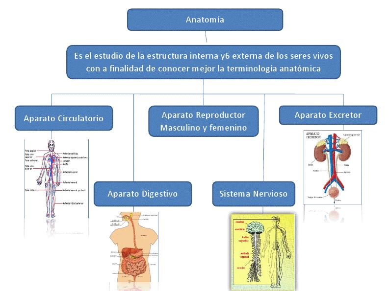 Anatomía | Materias de Especialidad