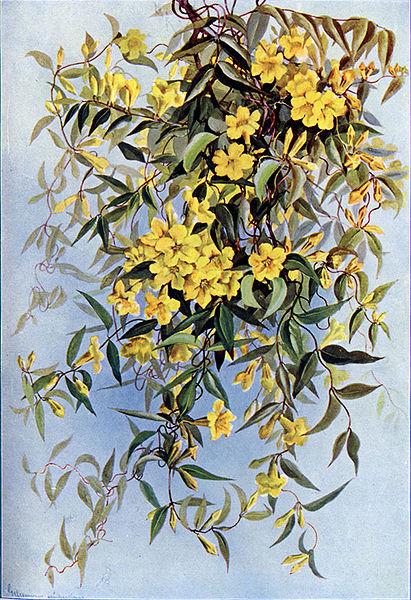 Flower Power Yellow Jessamine 137
