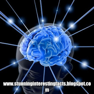 human-brain-interesting