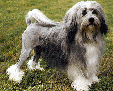 Neat-Pets ( Dogs & Cats ): Most Expensive Dog Breeds in the World