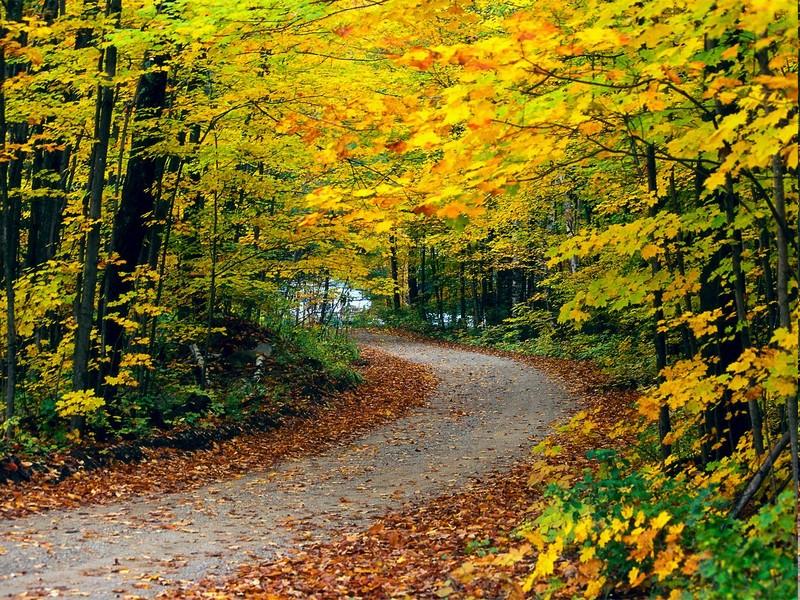 autumn fall nat... Fall Nature Wallpaper