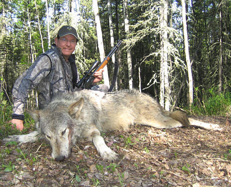 the necessity of legalizing wolf hunting in Hunting is often justified on the claim that wildlife populations must be controlled and as an alternative to so-called factory farming.