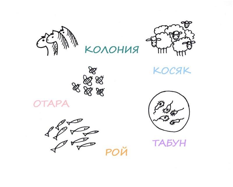 Названия различных групп животных