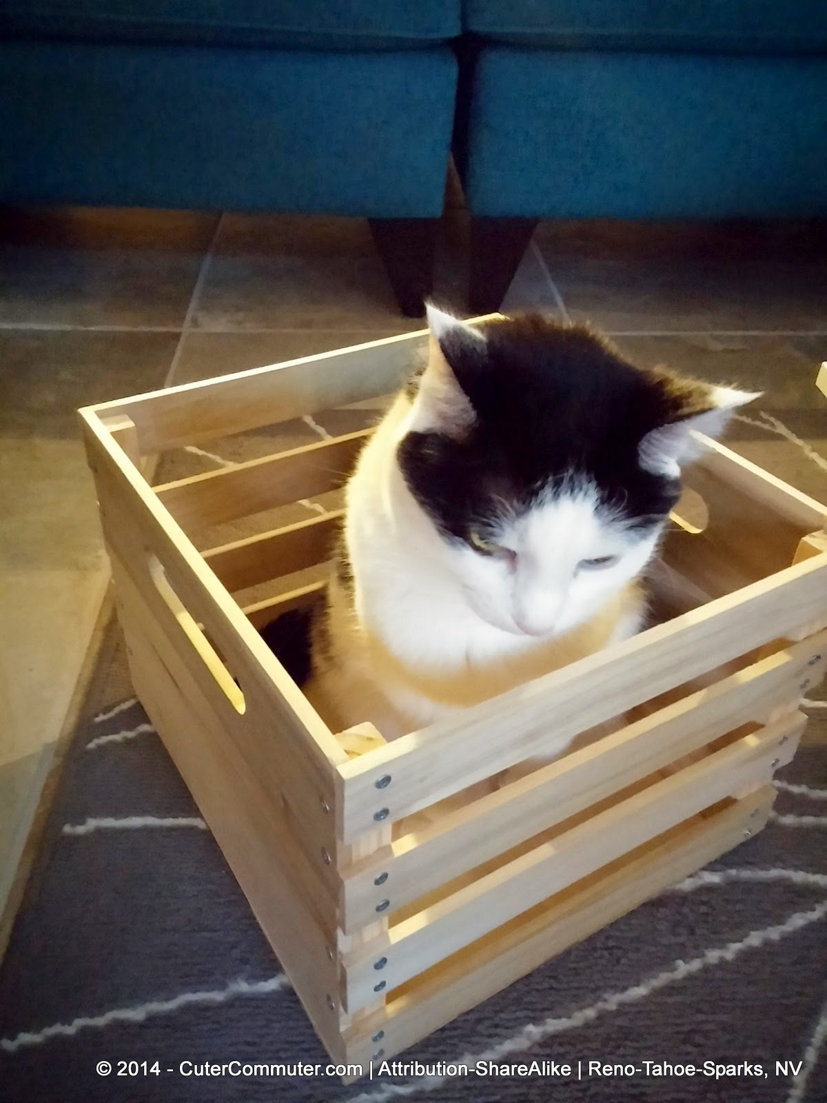cat sitting in milk crate