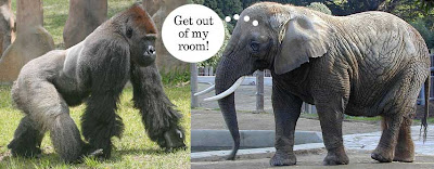 Photos of a gorilla and an elephant facing each other, with the elephant thinking Get out of my room!