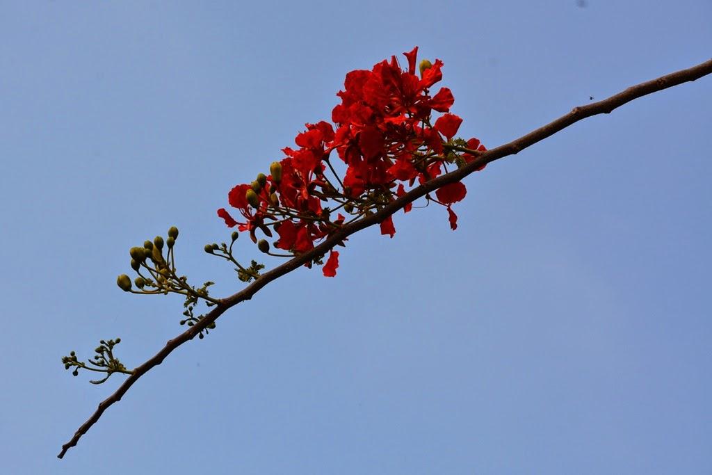 Promthep Cape Phuket flower