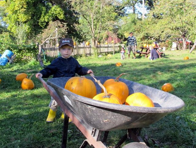 Spokesmama Southlands Heritage Farm Pumpkin Patch
