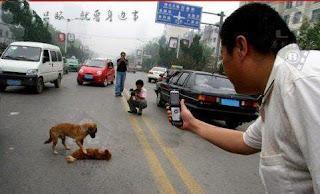 a lealdade dos animais