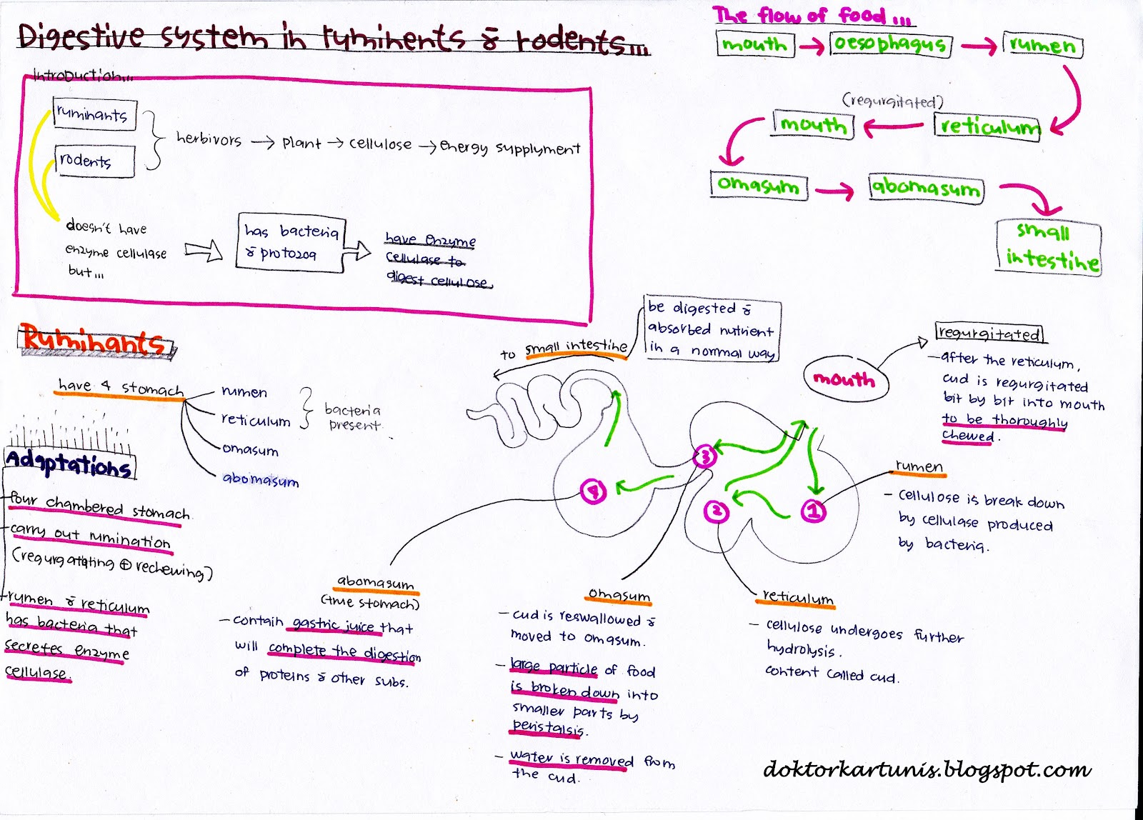 biology form 4 chapter 6 essay
