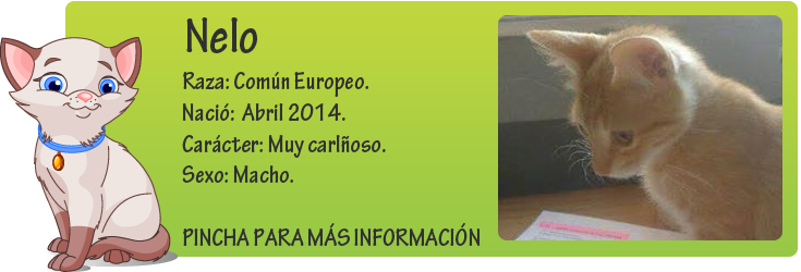 http://mirada-animal-toledo.blogspot.com.es/2014/07/nelo-pequeno-rubito-en-adopcion.html