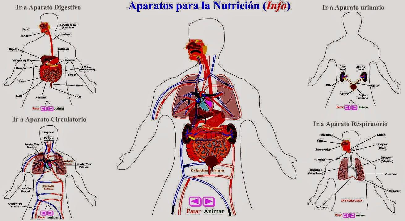 http://cienciasnaturales.es/APARATOS.swf