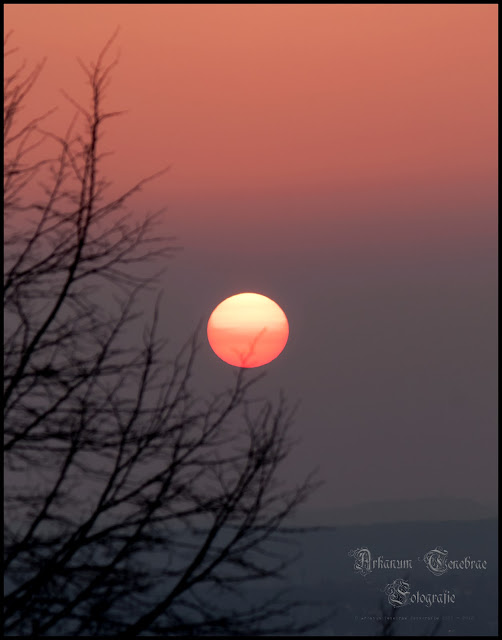 Sonnenuntergang- Die Sonne auf dem Kappelberg