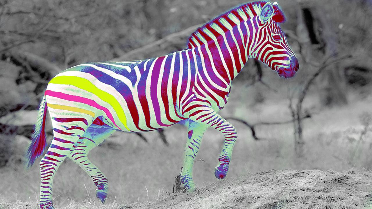 Free HD Wallpapers: Multi Color Zebra Bedding HD Wallpapers Multi Colored Zebra Print Wallpapers