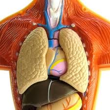 Preparate excelente in tratarea afectiunilor respiratorii