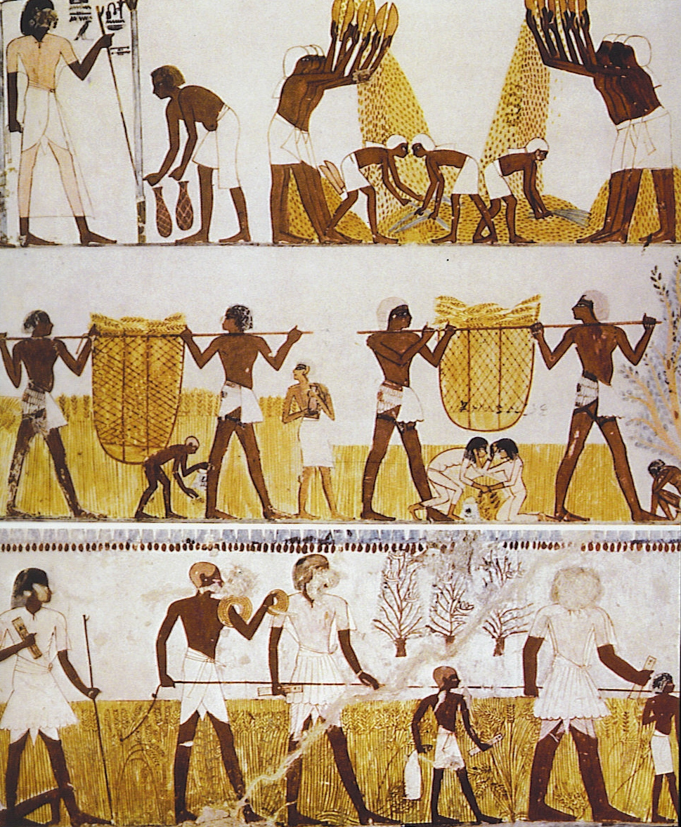 Egyptian Ancient Egypt Daily Life