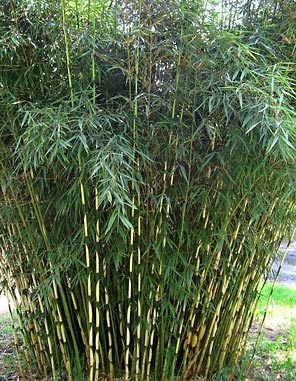 Bamboo Privacy Screen5