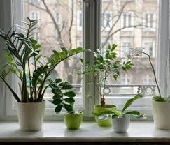 Cr er vos produits naturels simple et pas cher les plantes pour d polluer nos maisons - Plante verte dans une chambre a coucher ...