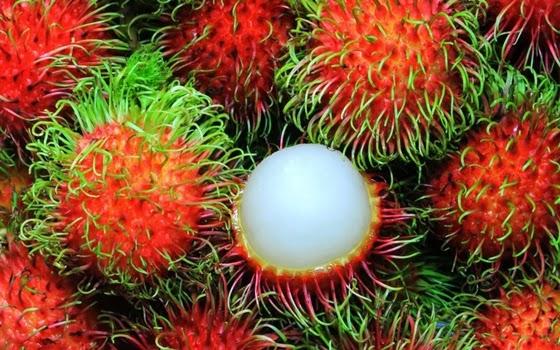 10+buah+paling+aneh+di+dunia,+Rambutan.j