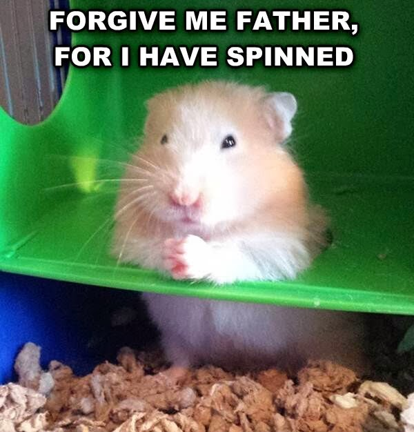 30 Funny animal captions - part 19 (30 pics), hamster picture with funny caption, forgive me father for i have spinned