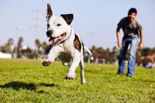 Hiperaktywny pies