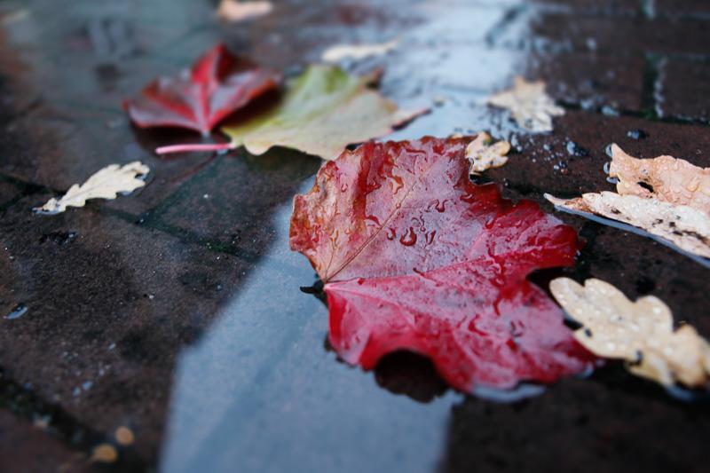 Bild Herbstlaub
