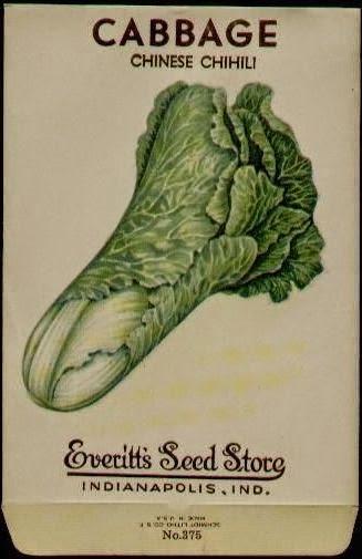 Chinese Chihili Cabbage