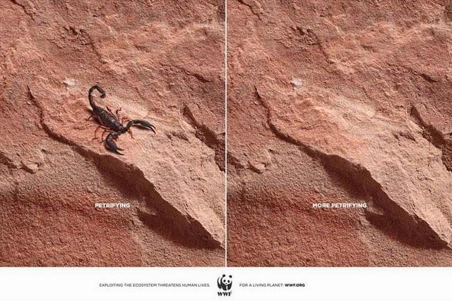 wildlife-ads-5