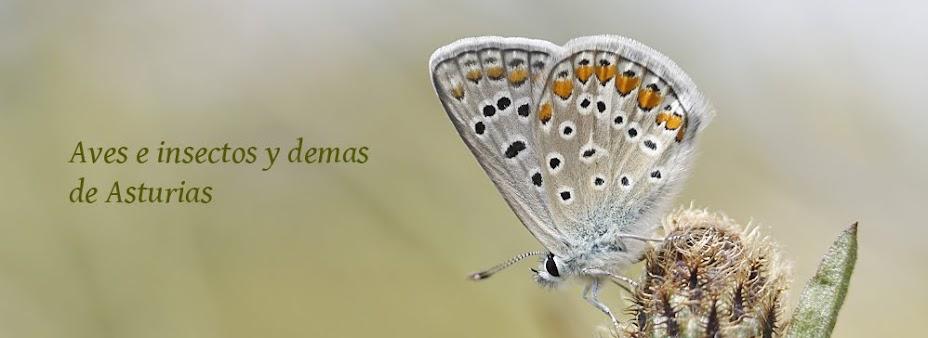 Aves , Insectos y demas en Asturias
