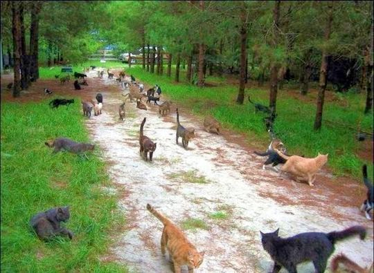 Caboodle Ranch Cat Sanctuary