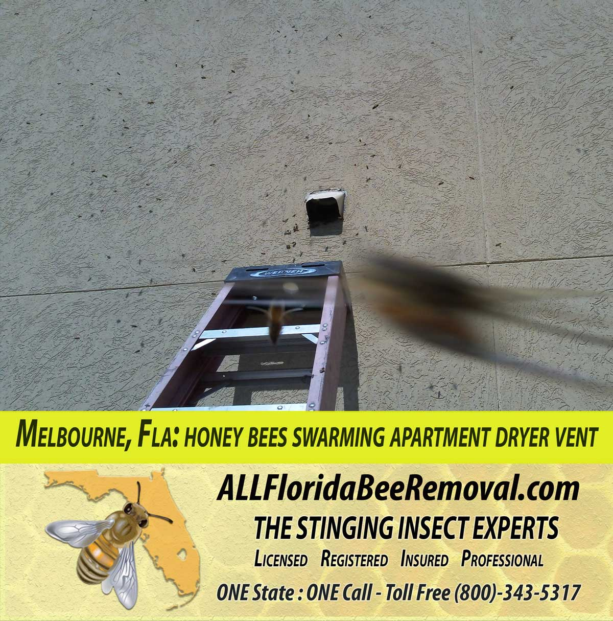 all florida recent bee removals march 2012