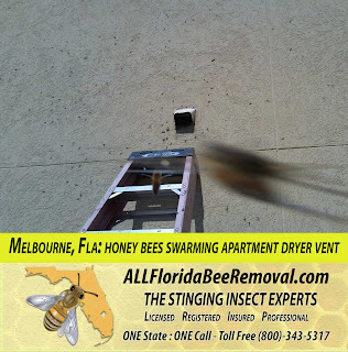 all florida recent bee removals melbourne fla honey