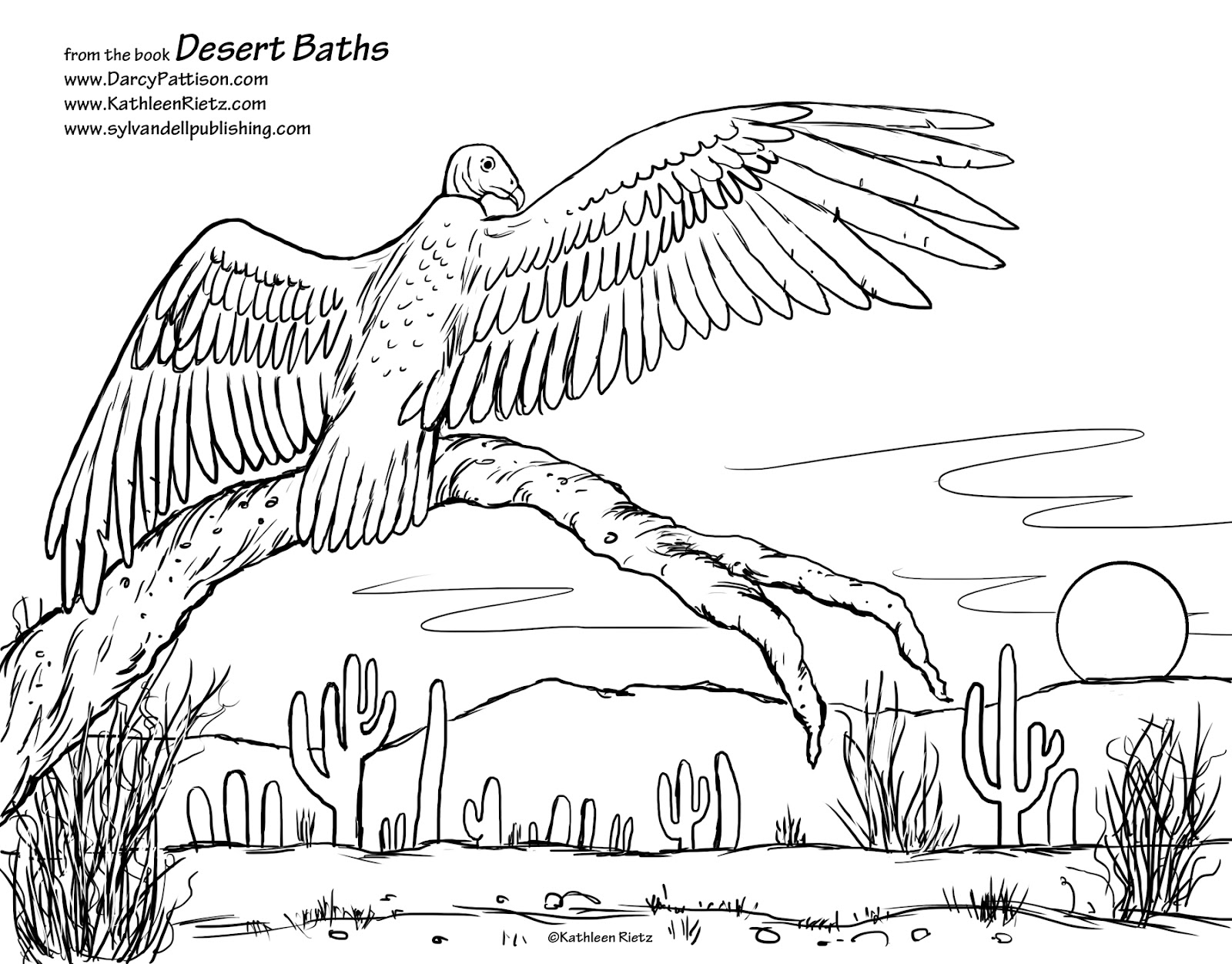 European Beaver Coloring Page Free Printable Coloring Pages Color