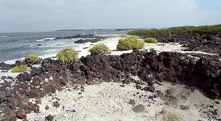 La Calaera Isabela Island, Galapagos