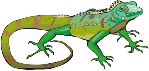 Dibujos de iguanas infantiles - Imagui