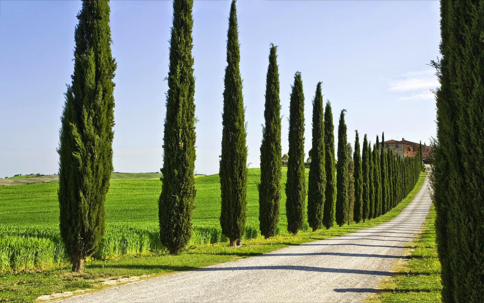 Home and garden types of cypress trees tips for growing for Jardines italianos