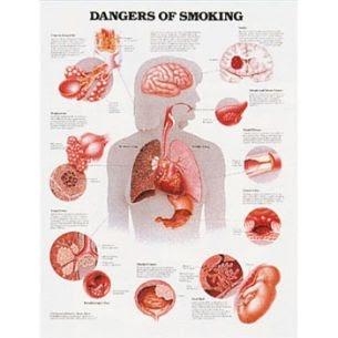Auswirkungen von Tabakrauch auf Lunge und