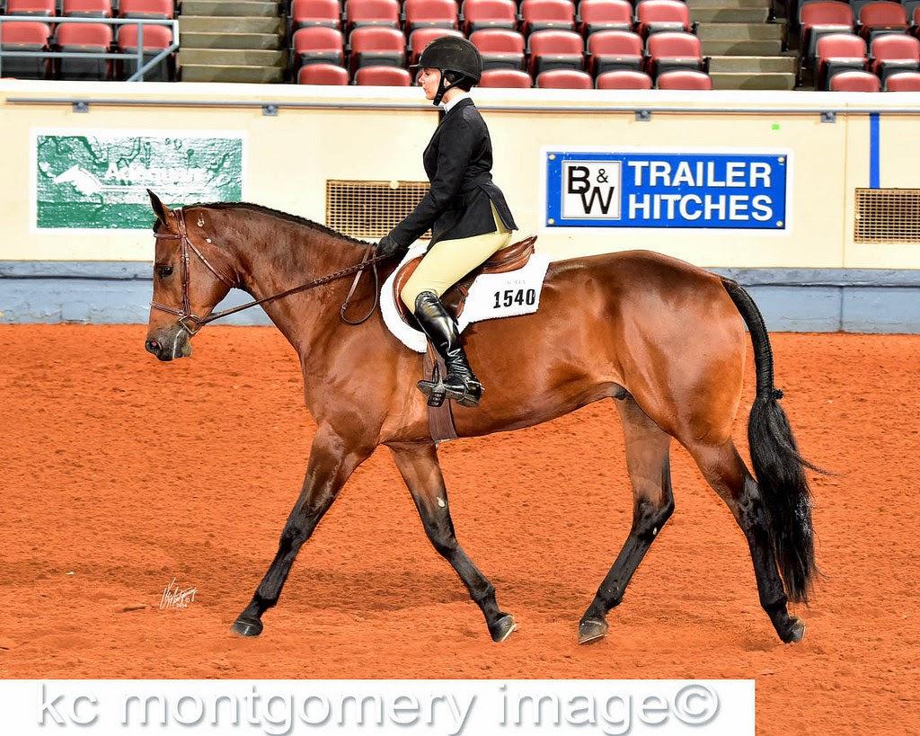 AQHA Hunt Seat Equitation