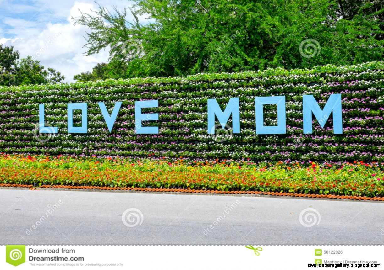 Colorful Flower Wall And Words love Mom Stock Photo   Image