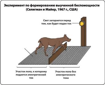 Мартин Селигман опыты на собаках