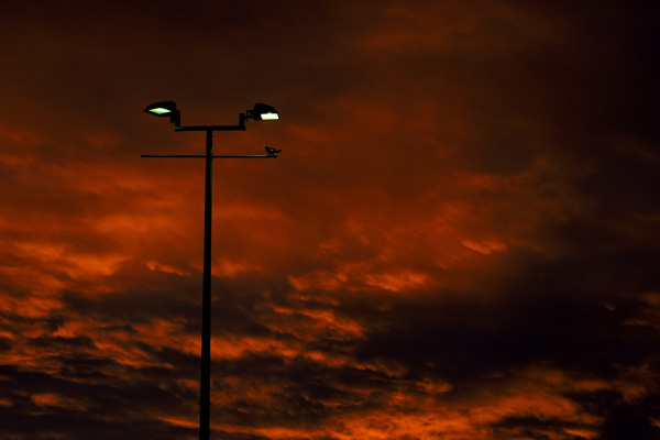 Fujifilm X-Pro1 Red sky, XF60mmF2.4 R Macro F9 at 1/250th 400iso