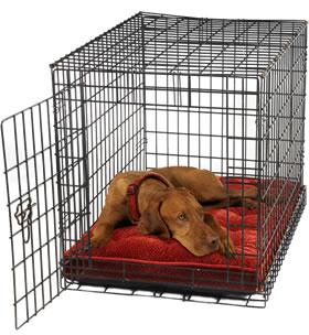 Dog Training Tips - Crate Training