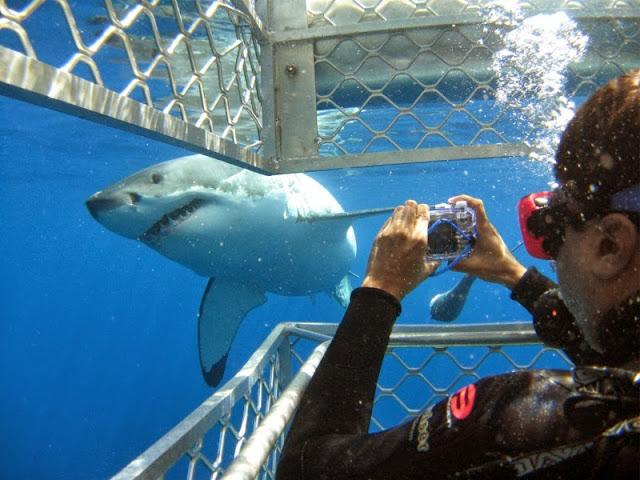 фото акулы из клетки